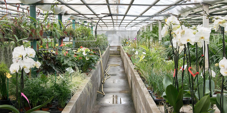 Contacter Appy, Pépiniéristes à Roussillon, 84220, Apt. Ventes de plantes, poteries dans le Vaucluse