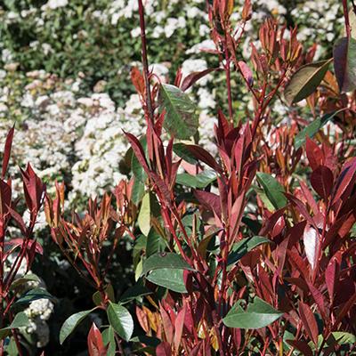 Vente de plantes d'ornement à Apt, Gordes (Vaucluse)