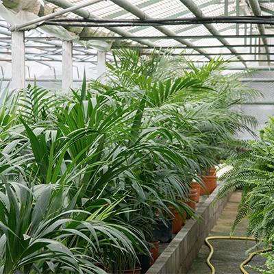 Plantes d'intérieur, horticulture à Roussillon, Coustellet, Pépinière Appy