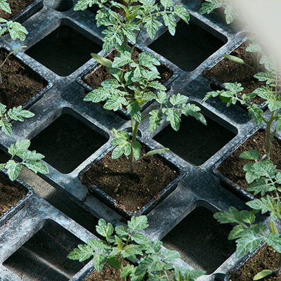 Vente de plantes pour le potager, pépinière à Roussillon, Vaucluse