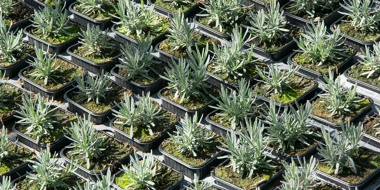 Horticulture à Roussillon (84220-Vaucluse). Plantes intérieures, pour jardin, agrumes, plantes du potager...